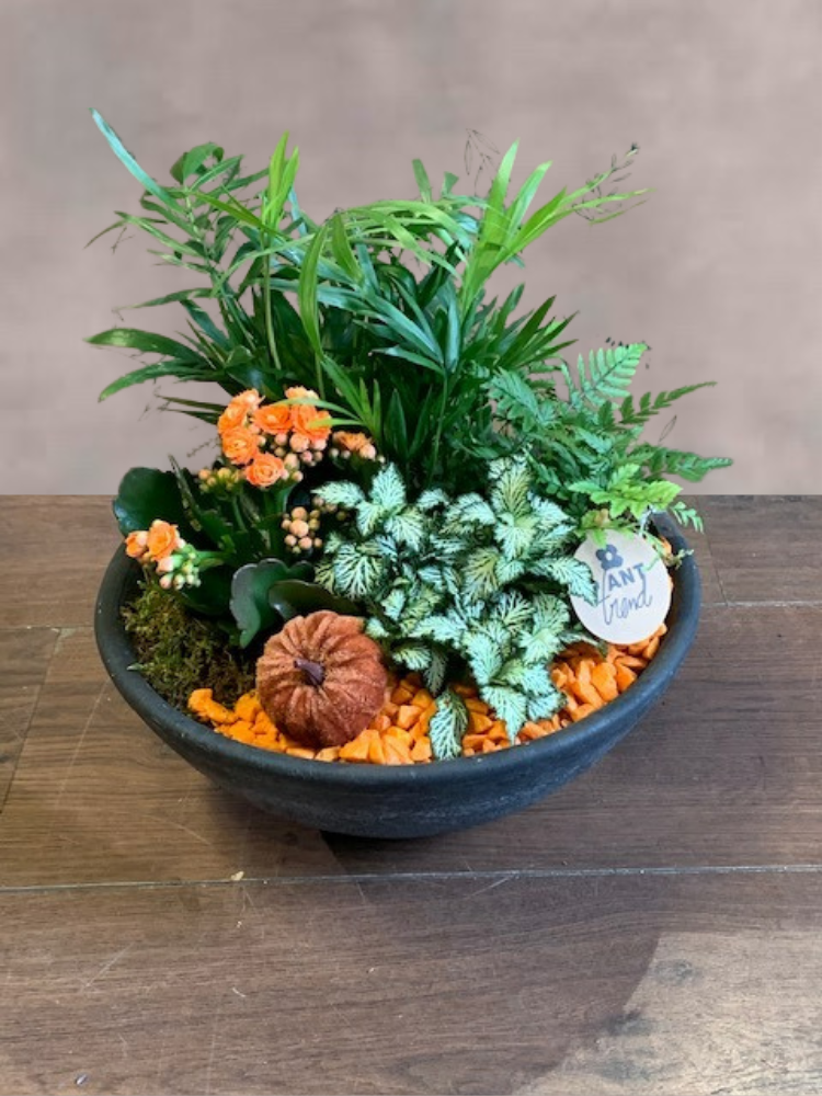 Autumn Plant in a Bowl