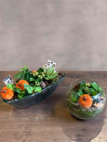 Ultimate Autumn Plant Gift in Glass Bowls
